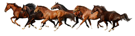 11768968-horse-isolated-galloping